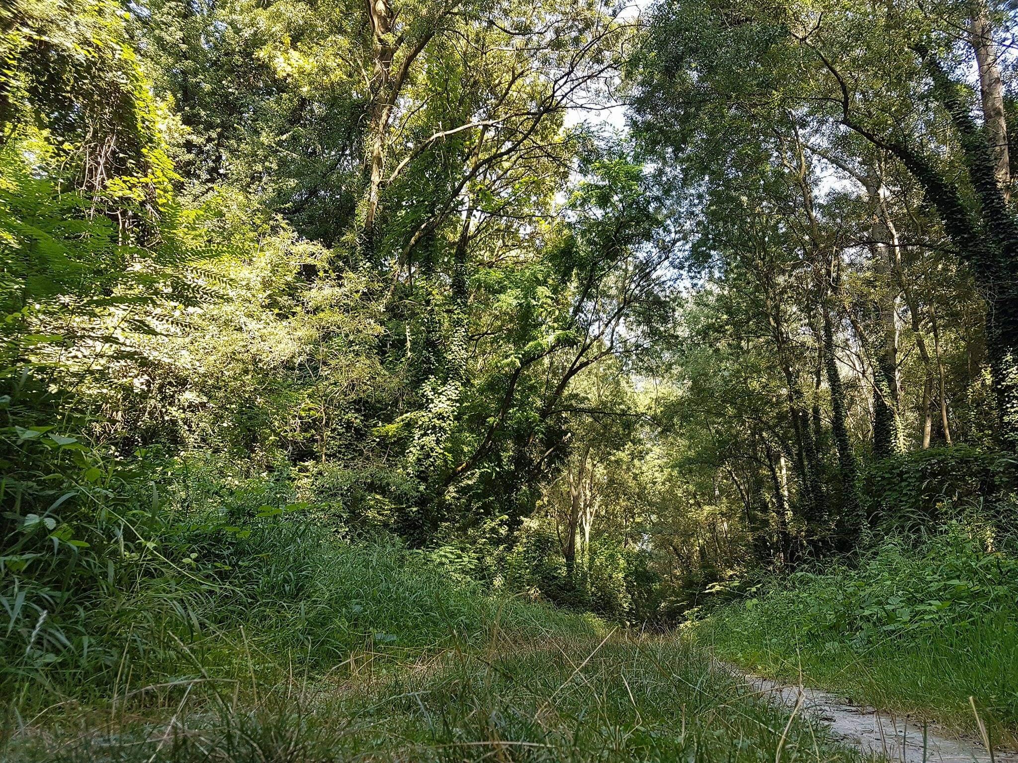 Il bosco della Panfilia
