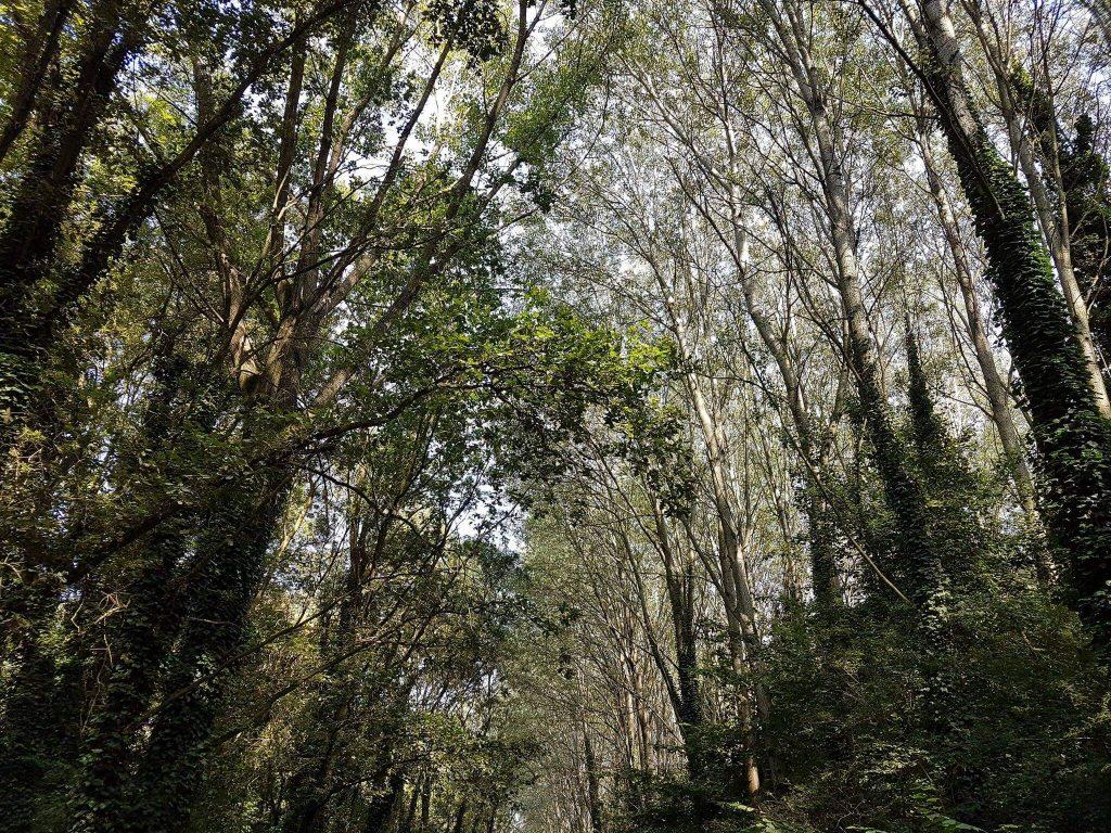 alberi del bosco
