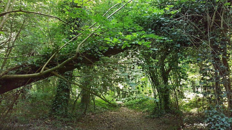 Il bosco della Panfilia: freschi pomeriggi nella natura