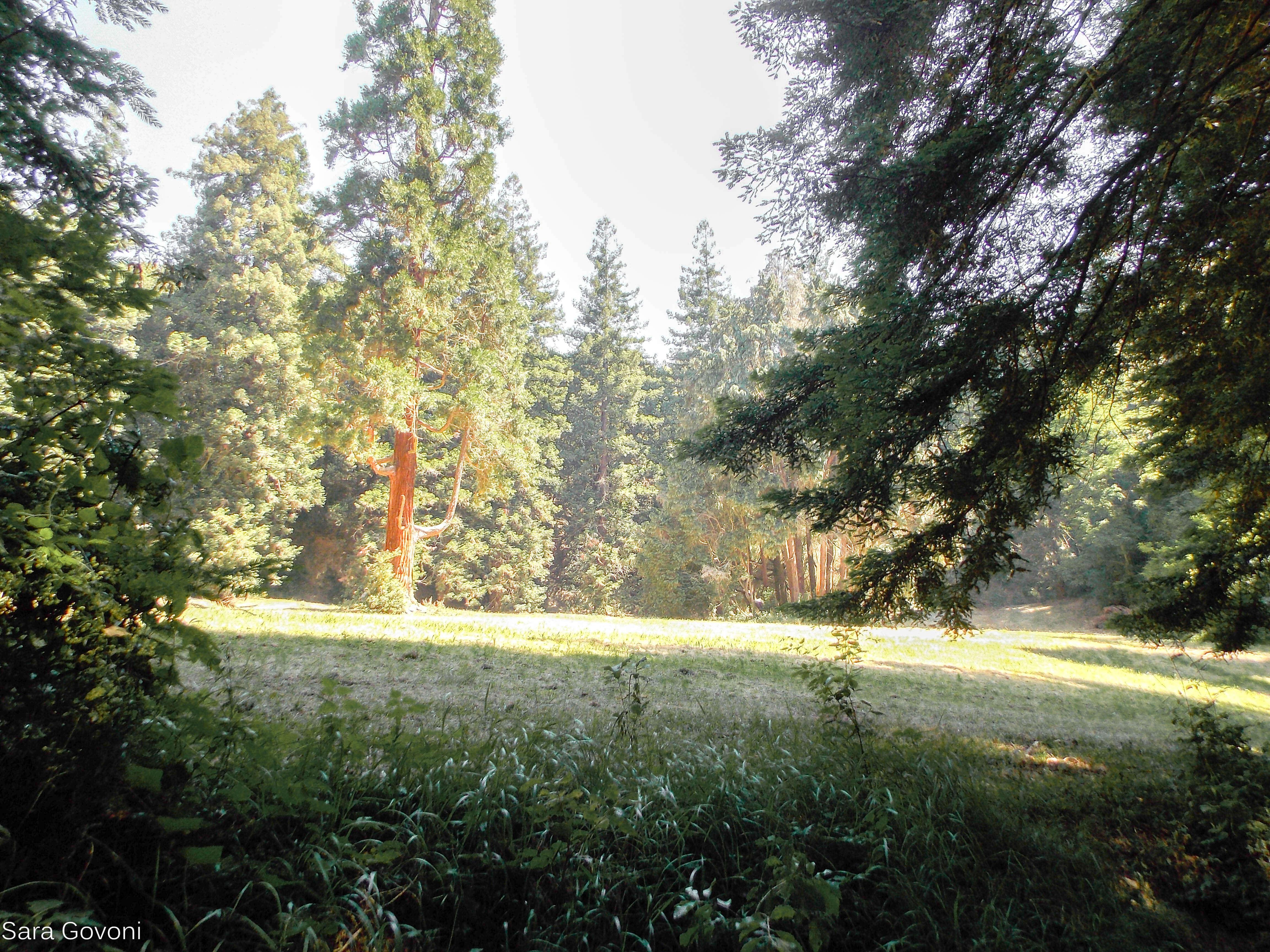 il bosco secolare attorno a Sammezzano