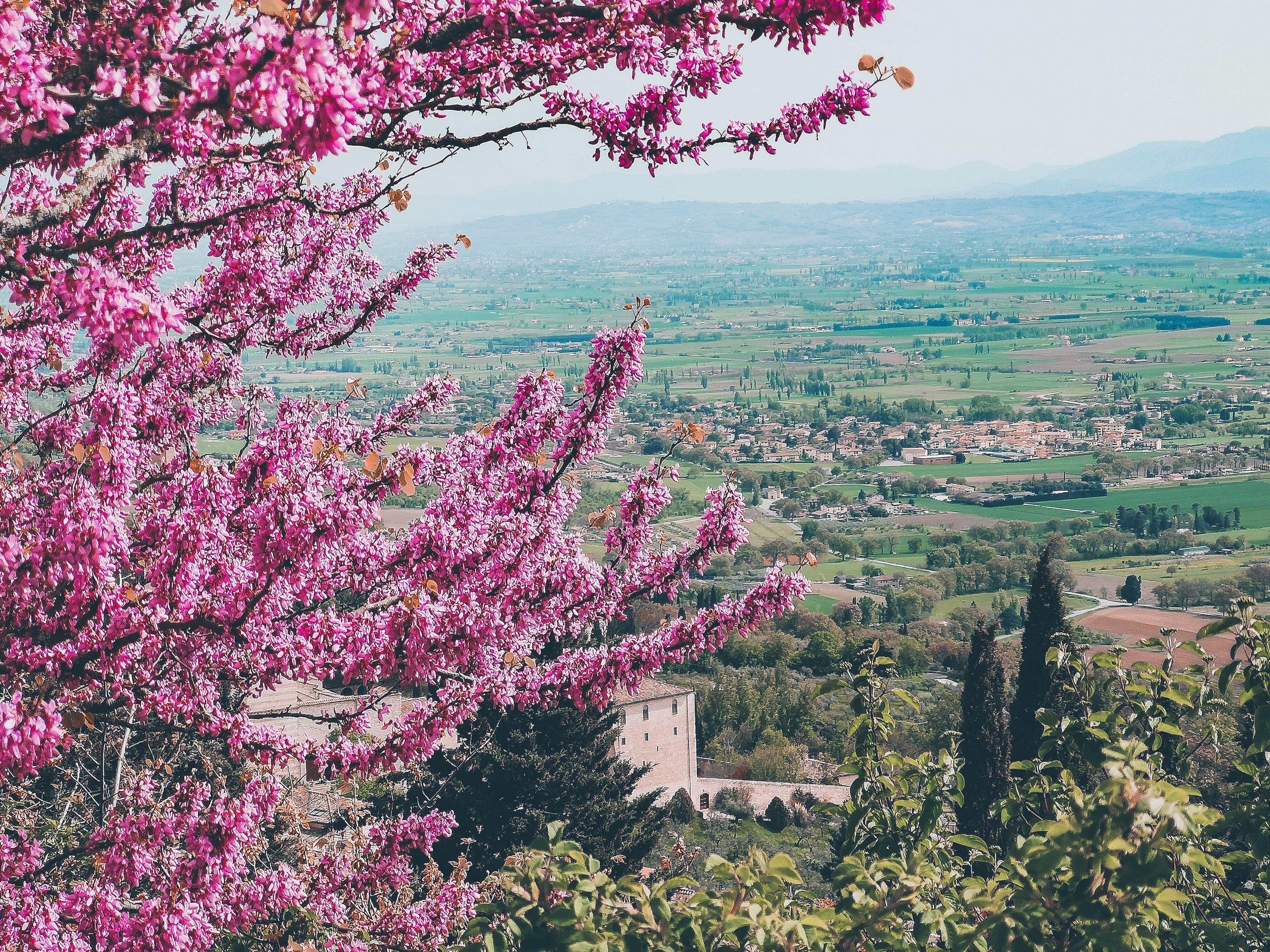 Cosa fare ad Assisi: cosa vedere, fare e mangiare | la guida completa