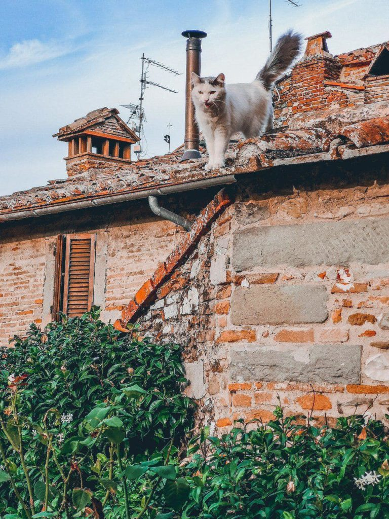 Cosa vedere ad Anghiari: il borgo dei gatti