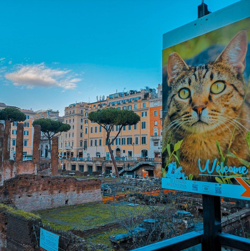 Alla ricerca dei gatti di Roma itinerario gattaro per la Città Eterna