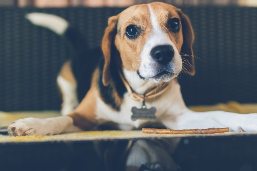 Hotel Pet Friendly di Ferrara e consigli per i padroni