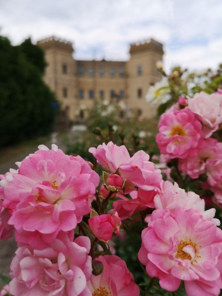 Alla scoperta delle Delizie Estensi di Ferrara: castello della Mesola