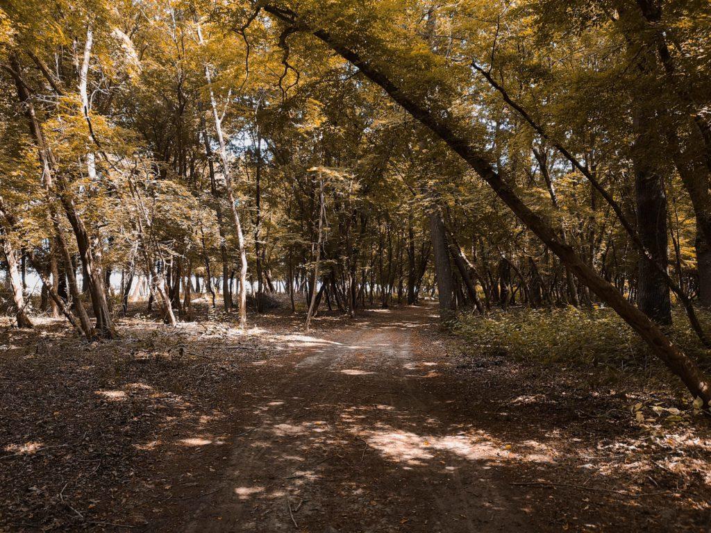 Cosa vedere a Mesola e al Boscone della Mesola: tra verde e Delizie