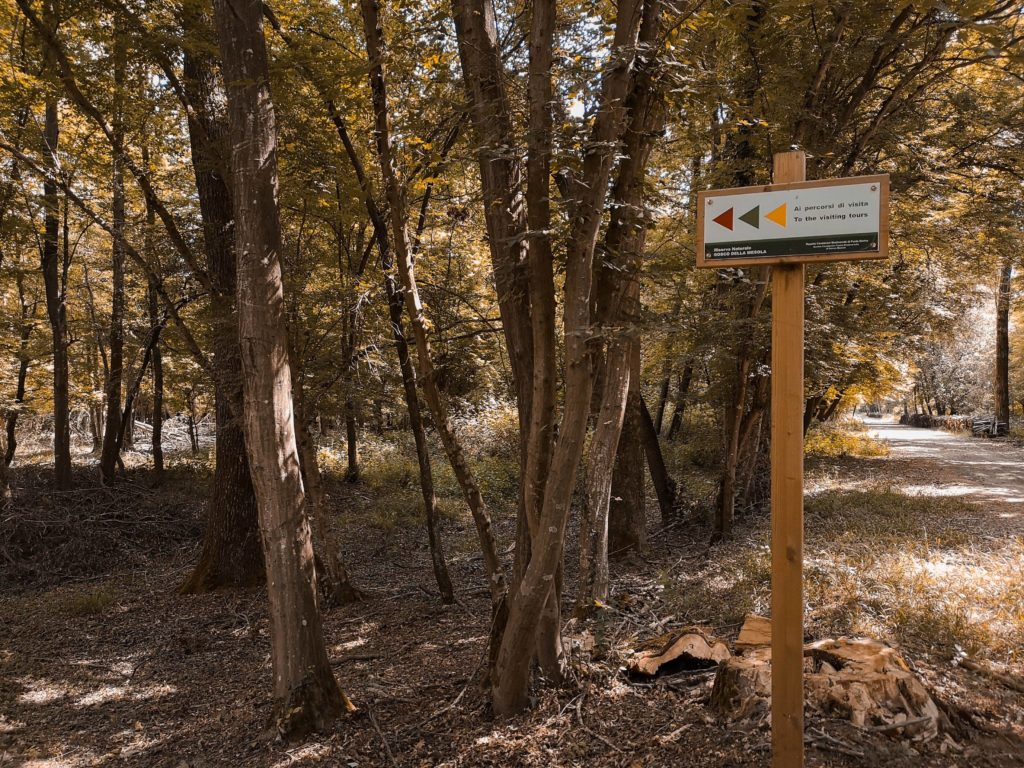 trekking in Emilia Romagna: boscpne della Mesola