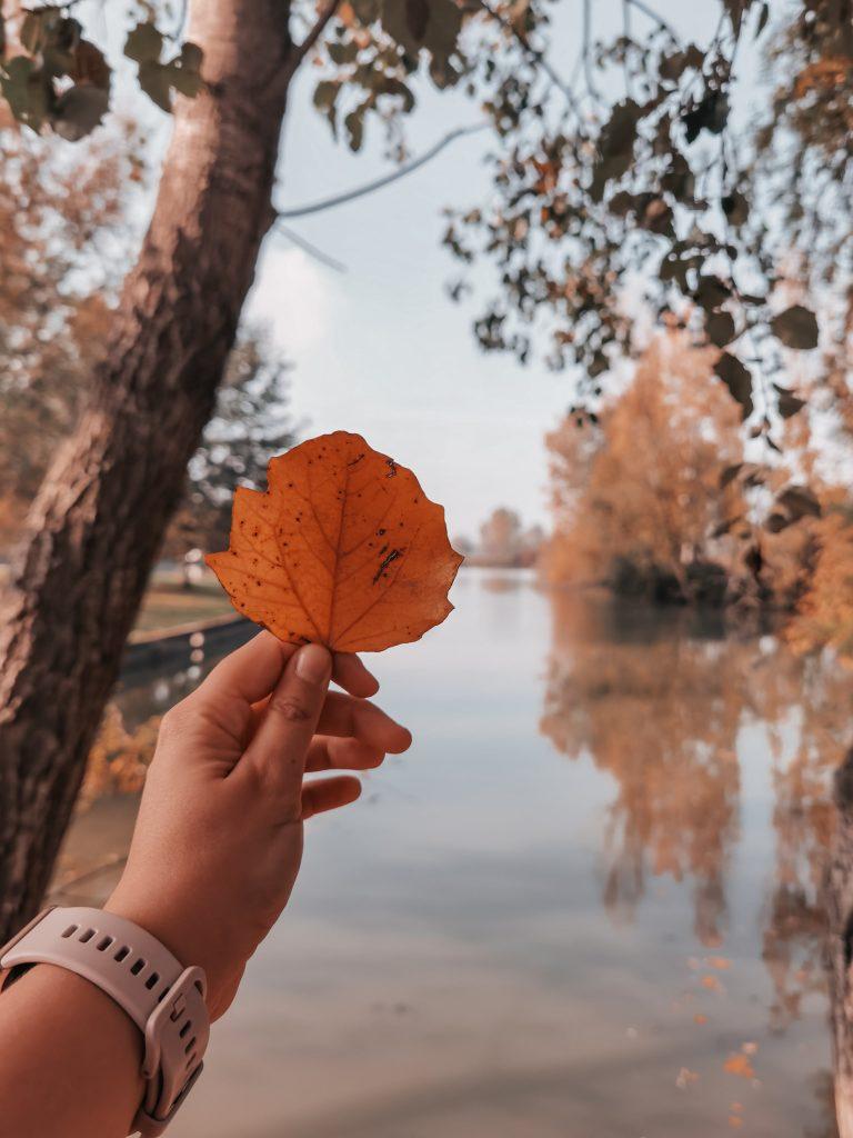 Dove ammirare il foliage a Ferrara: scorci autunnali tra centro e provincia