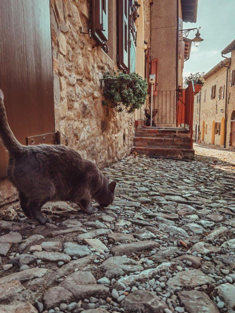 Borghi vicino a Bologna: gatto in primo piano lungo una via di Monteveglio