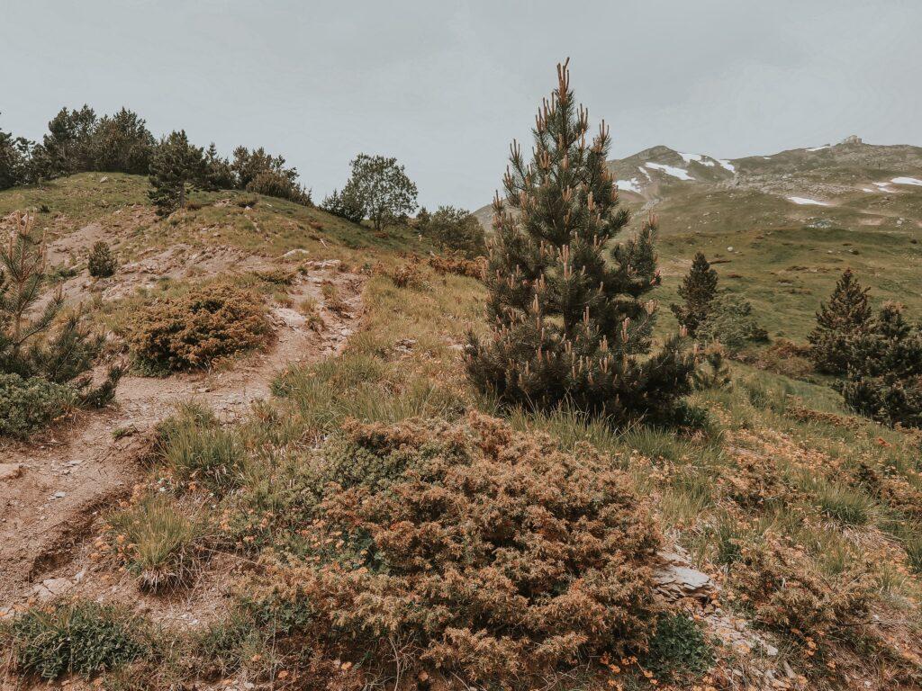lungo il pendio del monte cimone, vegetazione e fiori