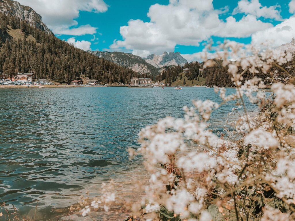fiori incorniciano lago di Misurina