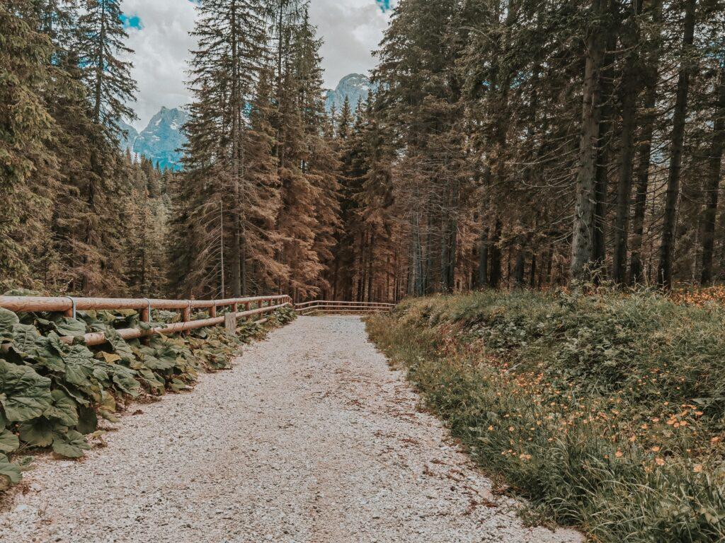 il sentiero ciclo pedonale per Misurina avvolto dagli alberi